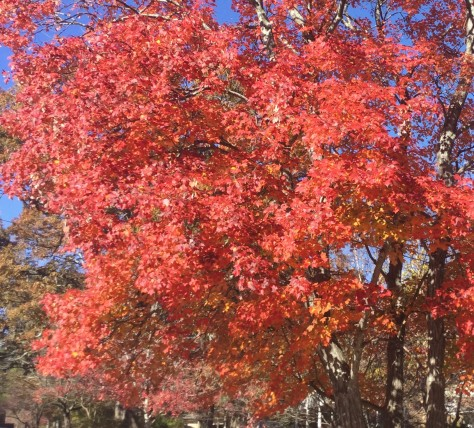 tree-autumn-orange-2