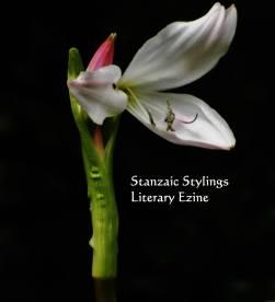 stanzaic-stylings-logo